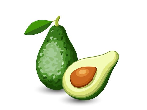 Frutti dell'avocado di vettore isolati su fondo bianco. vettore, illustrazione