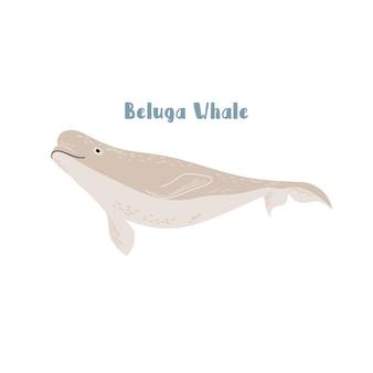 Balena beluga di vettore. illustrazione del fumetto su sfondo bianco per adesivo, design