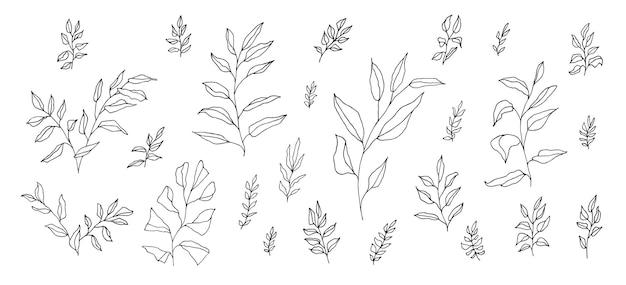 Insieme botanico estetico boho di vettore di ramoscelli disegnati a mano lineari neri isolati su bianco. rami artistici in stile bohémien per invito a nozze. disegno dell'erba di doodle elegante dell'annata. decorazione fogliame