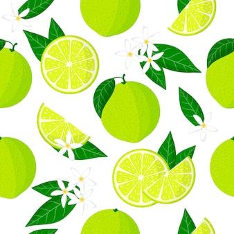 Reticolo senza giunte del fumetto di vettore con agrumi limetta o frutti esotici di calce dolce, fiori e foglie