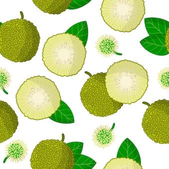 Reticolo senza giunte del fumetto di vettore con maclura pomifer o pane di scimmia frutti esotici, fiori e foglie su sfondo bianco