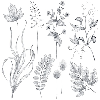Collezione vettoriale di fiori ed erbe disegnati a mano isolati su sfondo bianco