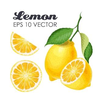 Raccolta vettoriale di limoni