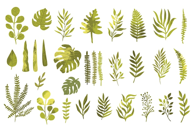 Insieme di elementi di design di vettore di felce foresta verde, verde tropicale eucalipto verde arte fogliame foglie naturali erbe in stile acquerello.