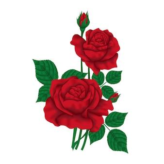 Disegno floreale di vettore: fiore rosso della rosa del giardino