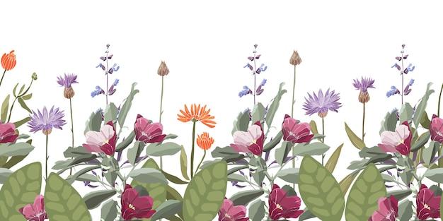Bordo decorativo con motivo floreale senza cuciture vettoriale con fiordaliso centaurea calendula salvia