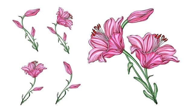 Composizioni floreali vettoriali con fiori di giglio