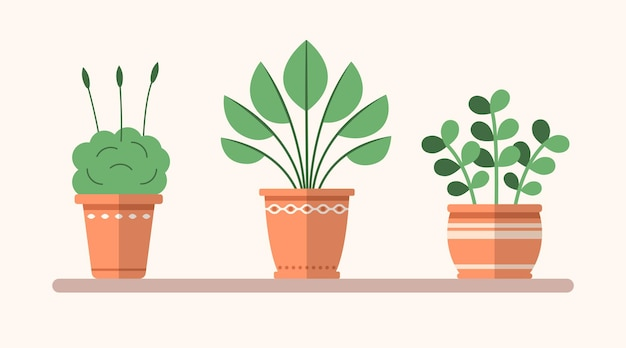 Piante piatte verdi vettoriali in vaso sullo scaffale illustrazione interna semplice