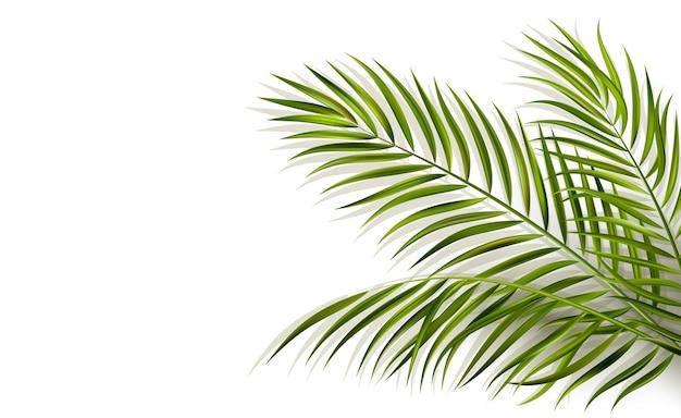Foglia verde di vettore della palma con ombra di sovrapposizione isolata su priorità bassa bianca