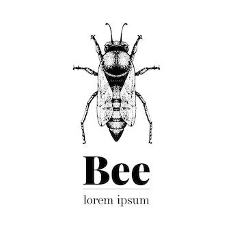 Illustrazione disegnata a mano di vettore dell'ape. modello di logo stile retrò.