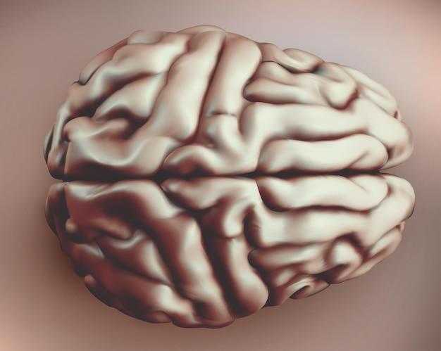 Cervello umano vettoriale in stile retrò, vista dall'alto