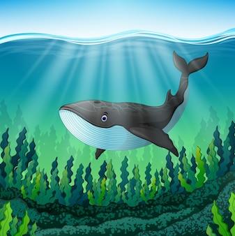 L'illustrazione di vettore della balena del fumetto nuota nel mare