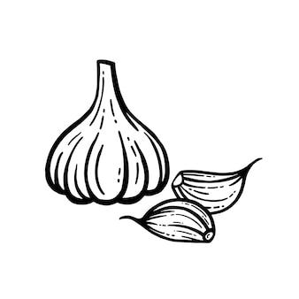 Illustrazione vettoriale di aglio su sfondo bianco.