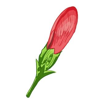 Illustrazione vettoriale di una pianta di ibisco fiori e foglie di una pianta su uno sfondo bianco isolato
