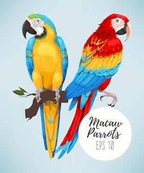 Illustrazione vettoriale di pappagalli ara alta dettagliata