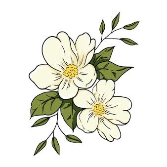 Illustrazione vettoriale fiore di gelsomino