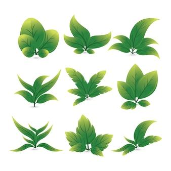 Illustrazione di vettore: insieme dell'icona delle foglie varie forme di foglie verdi degli alberi e delle piante