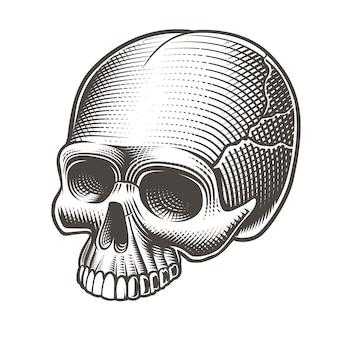 Illustrazione vettoriale di un teschio senza mascella in stile tatto su sfondo bianco