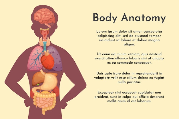 Accumulazione degli organi interni di vettore nello stile del fumetto. anatomia del corpo umano. organo di biologia dell'uomo: cuore, cervello, polmoni, fegato, stomaco, reni e icone esterne.