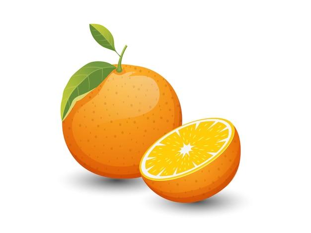 Vector frutti arancioni isolati su sfondo bianco. vettore, illustrazione