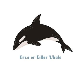 Vector orca o balena killer. illustrazione del fumetto su sfondo bianco per adesivo, design