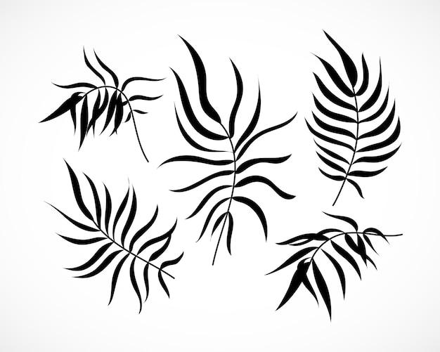 Vector palm tree leaves silhouette set isolato collezione di foglie di palma di cocco tropicale disegnata a mano