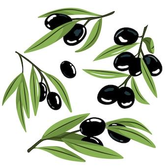 Immagini vettoriali di olive nere su bianco