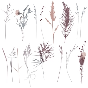 Piante vettoriali ed erbe set illustrazione. illustrazione dell'acquerello.