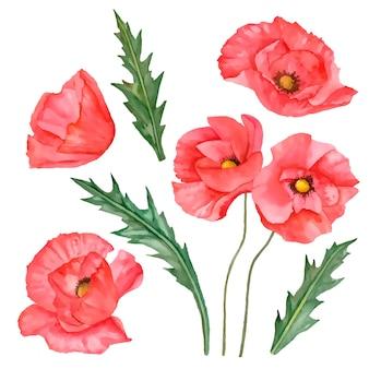 Illustrazione vettoriale di papaveri di fiori di campo rosso isolati su sfondo bianco Vettore Premium