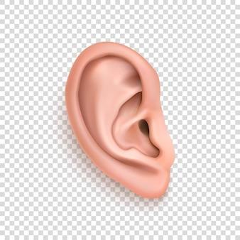 Primo piano realistico dell'icona dell'orecchio umano di vettore isolato su priorità bassa di griglia di trasparenza. modello di progettazione della parte del corpo, organo umano. illustrazione eps10.