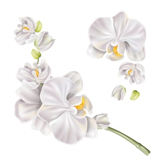 Insieme realistico del fiore dell'orchidea bianca di vettore
