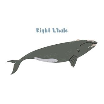Vettore, balena franca. illustrazione del fumetto su sfondo bianco per adesivo, design