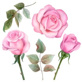 Vector rose e foglie illustrazione floreale isolato su sfondo bianco