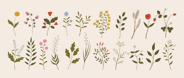 Insieme di vettore delle foglie dei rami dei fiori delle erbe selvatiche dell'annata botanica