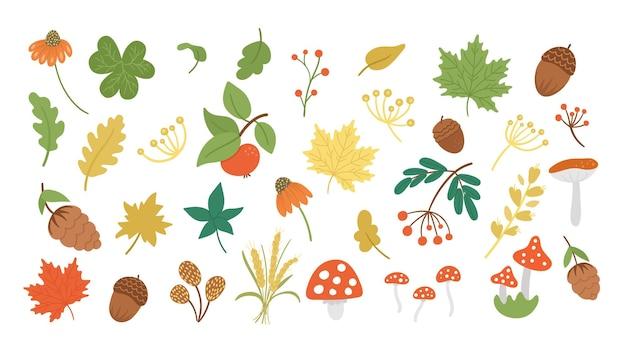 Insieme di vettore delle erbe autunnali carine, piante. collezione con foglie, mela, ghiande, coni. verde autunnale