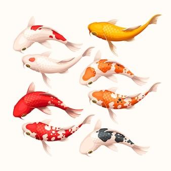 Set vettoriale di pesci koi bianchi, rossi e gialli dettagliati alti high