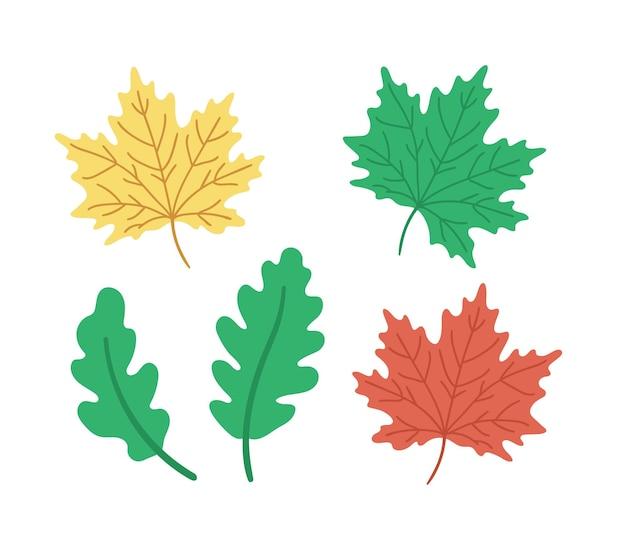 Insieme di vettore delle foglie dell'albero di acero di quercia. torna a scuola clipart educative