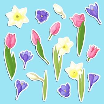 Set vettoriale di adesivi con bellissimi fiori primaverili disegnati a mano: narcisi gialli, tulipani rosa e crochi viola, per il design e la decorazione