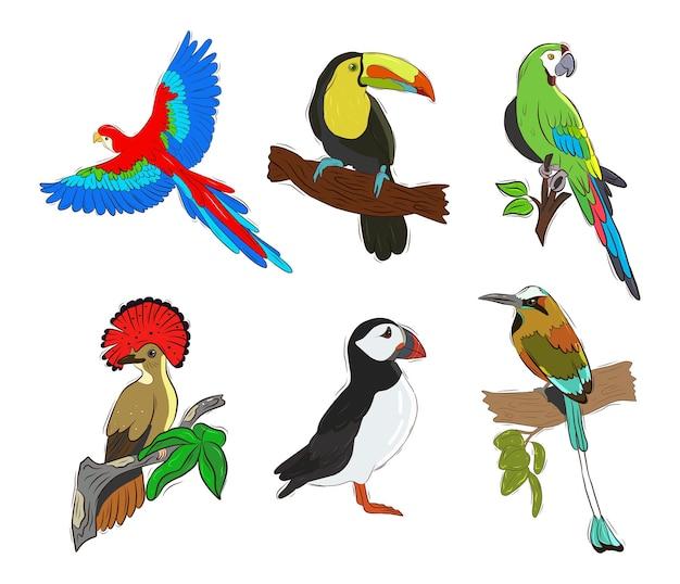 Insieme di vettore degli uccelli tropicali. uccelli colorati dipinti. collezione di adesivi con uccelli.