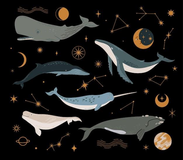 Insieme di vettore con balena cosmica, pianeti, stelle e costellazioni. diversi tipi di balena