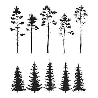 Insieme di vettore con alberi di pino isolati