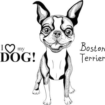 Cane di razza boston terrier di schizzo vettoriale sorridente
