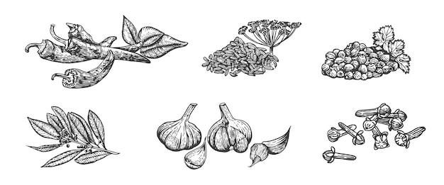 Illustrazione di schizzo vettoriale di spezie disegnata a mano cucina erbe peperoncino finocchio coriandolo foglia di alloro spicchio d'aglio