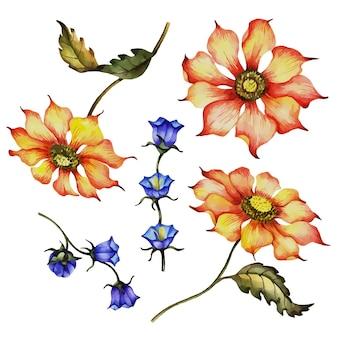 Illustrazione floreale disegnata a mano dei fiori selvaggi di vettore isolata su un background . bianco