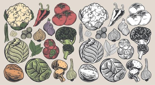 Collezione vintage disegnata a mano di verdure