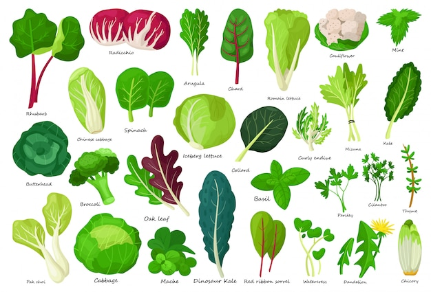 Icona del fumetto di lattuga vegetale