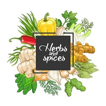Design quadrato vegetale con spezie ed erbe aromatiche.