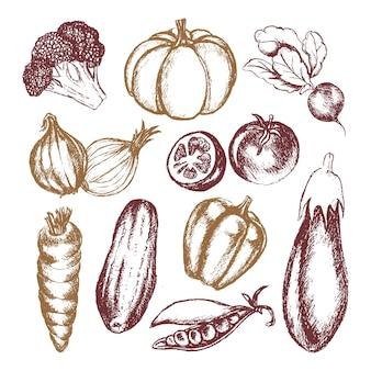 Verdure - composizione illustrativa disegnata a mano di vettore colorato. broccoli realistici, zucca, ravanello, cipolla, pomodoro, melanzana pepe cetriolo carota pisello
