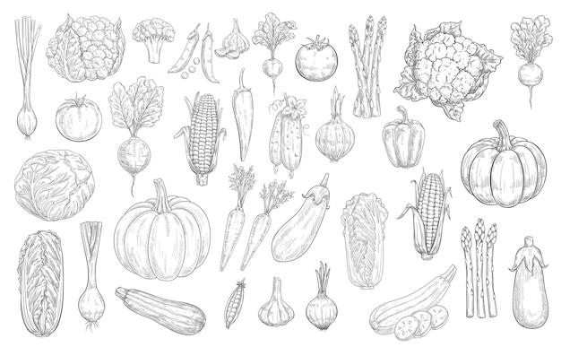Icone di schizzo di verdure, verdure di raccolto di cibo di fattoria, disegnate a mano