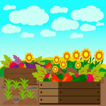 Verdure, girasole sul campo vector illustration